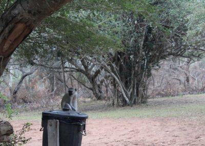 Monkeyon Bin